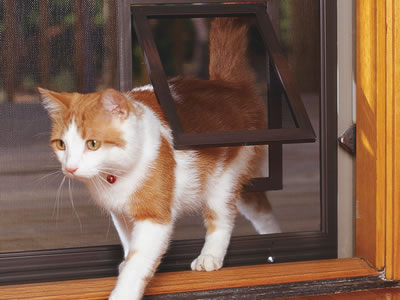 A cat is walking out of the small pet screen door.